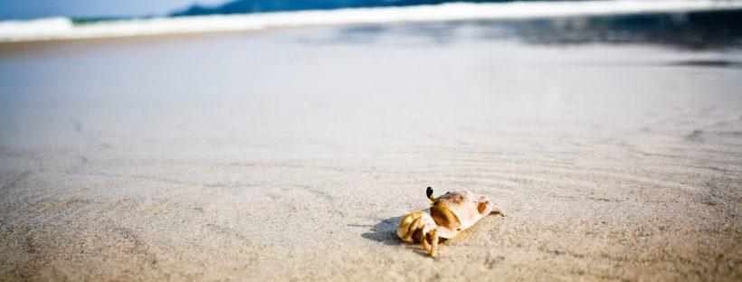 Краб на песке  № 96599 без смс
